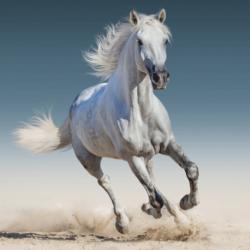 White horse poduszka cover