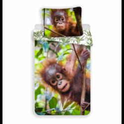 Orangutan 02