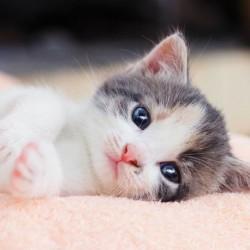 Kitten poduszka cover